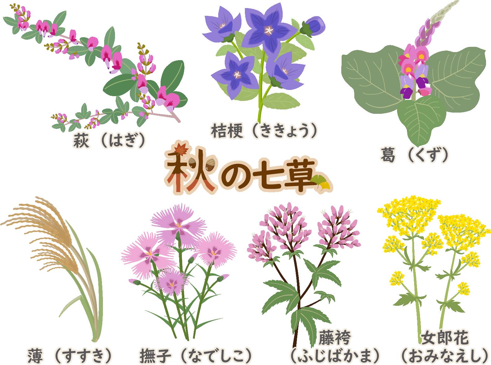 【千葉・青戸発】長瀞・秋の七草寺巡りと「有隣俱楽部」での竹膳料理ランチ